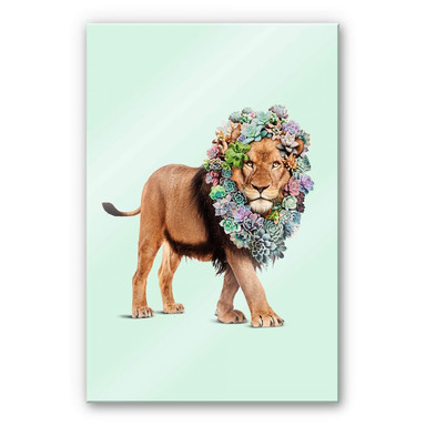 Acrylglasbild Loose - Succulent Lion