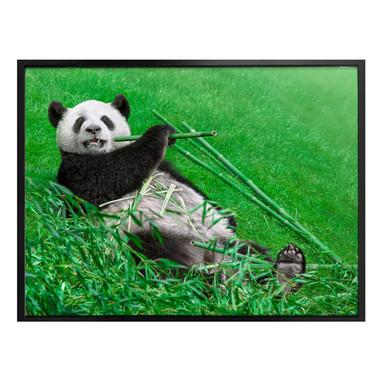 Poster Ben Heine - Glücklicher Panda