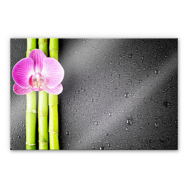 Acrylglasbild Orchid and Bamboo