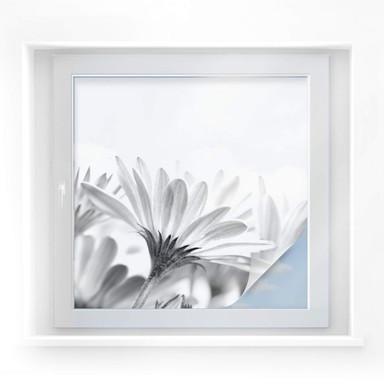 Sichtschutzfolie Gänseblümchen im Detail - quadratisch