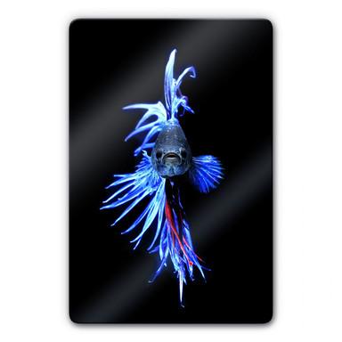 Glasbild Glowfish 1