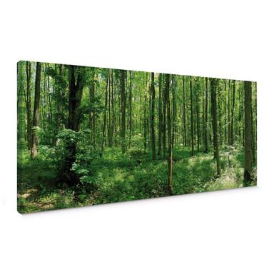 Leinwandbild Waldpanorama 01