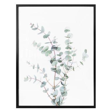 Poster Sisi & Seb - Eukalyptuszweig