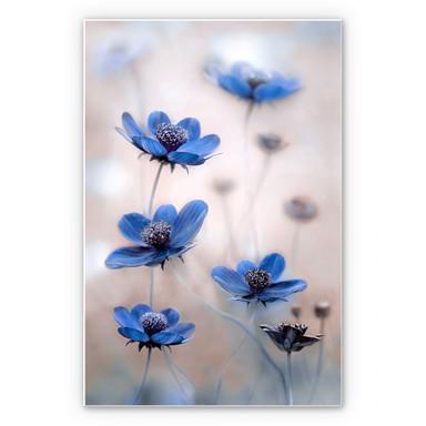 Wandbild Disher - Blue Cosmos