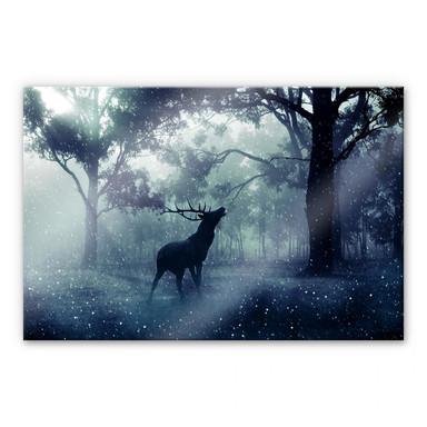 Acrylglasbild Hirsch im Morgenwald