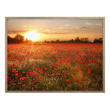 Poster Mohnfeld im Sonnenuntergang