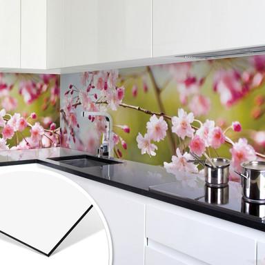 Küchenrückwand - Alu-Dibond- Cherry Blossoms