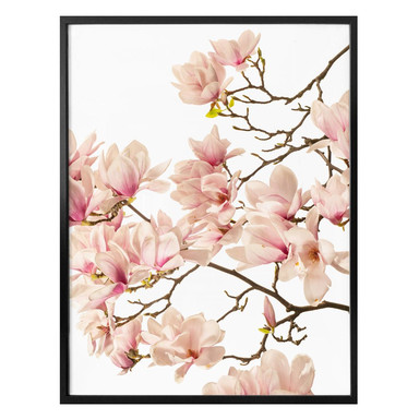 Poster Kadam - Flora Magnolia im Frühling
