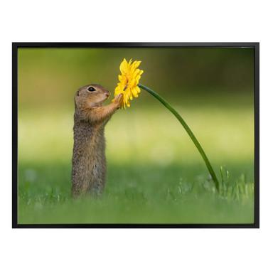 Poster van Duijn - Erdhörnchen hält Blume