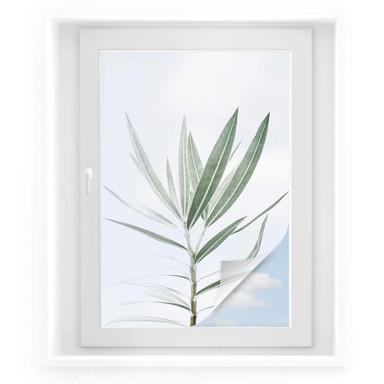 Sichtschutzfolie Sisi & Seb - Oleander