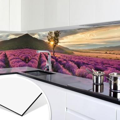 Küchenrückwand - Alu-Dibond - Lavendelblüte in der Provence