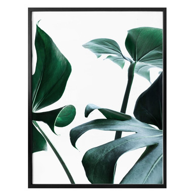 Poster Urban Jungle 03 - Monstera Deliciosa