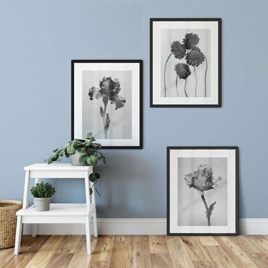 Poster Kadam - Blumen Trio mit Bilderrahmen (3er Set) - Bild 1