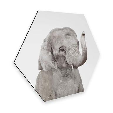 Hexagon - Alu-Dibond Sisi & Seb - Baby Elefant