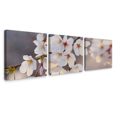 Leinwandbild Kirschblütenzweig (3-teilig)