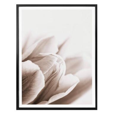 Poster Tulpe im Detail