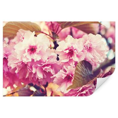 Wallprint Vintage Kirschblüten