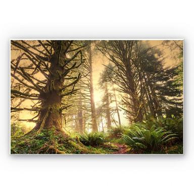 Wandbild Zauberwald