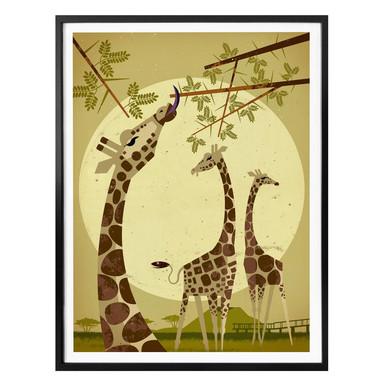 Poster Braun - Giraffes