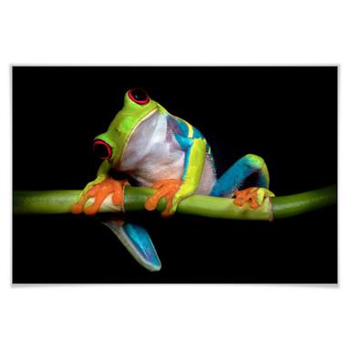 Poster Valverde - Green Frog