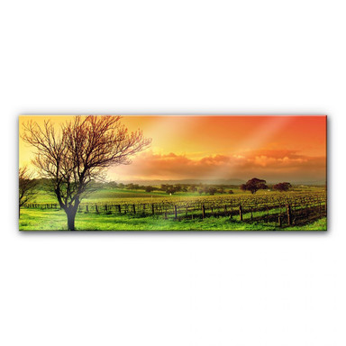 Acrylglasbild Weinlandschaft - Panorama