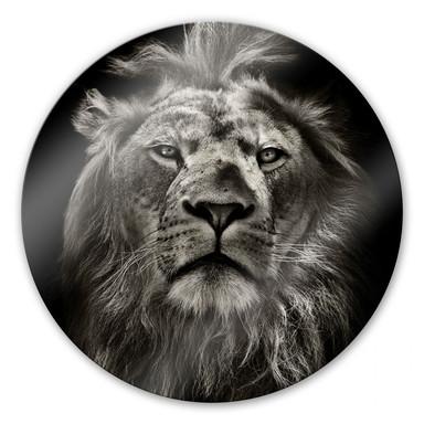 Glasbild Lion - rund