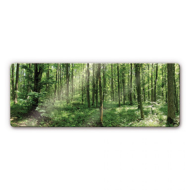 Glasbild Waldpanorama 01