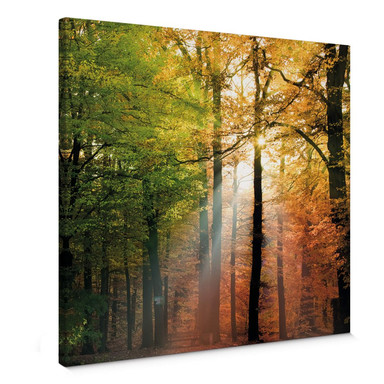 Leinwandbild Goldener Herbst