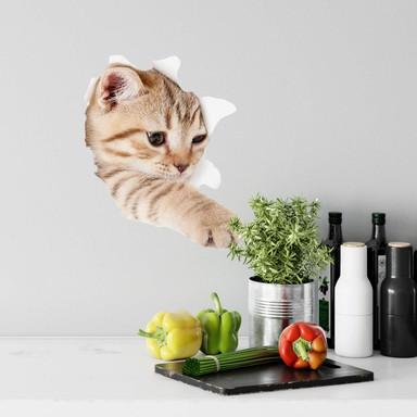 Wandtattoo Kätzchen auf Entdeckungstour