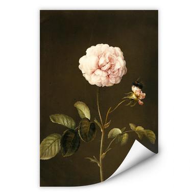 Wallprint Dietzsch - Essig-Rose mit Hummel