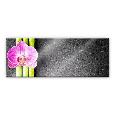 Acrylglasbild Orchid and Bamboo - Panorama (horizontal)