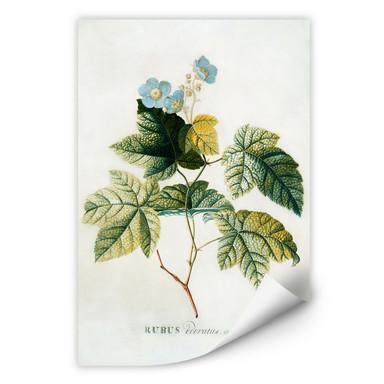 Wallprint Ehret - Rubus