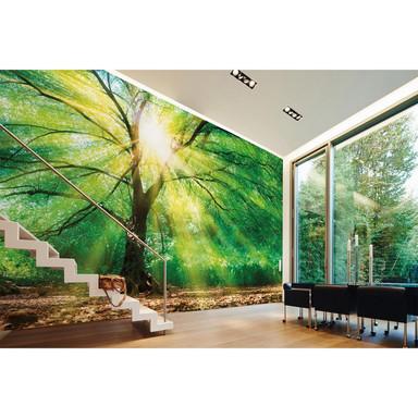 Livingwalls Fototapete Designwalls Forest Light Wald - Bild 1