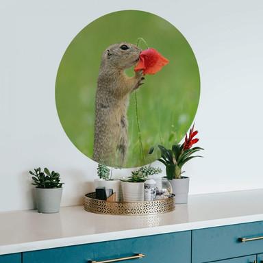 Wandtattoo van Duijn - Erdhörnchen mit Mohnblume