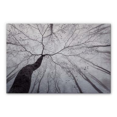 Alu-Dibond Bild mit Silbereffekt Pavlasek - Ein Blick in die Baumkronen