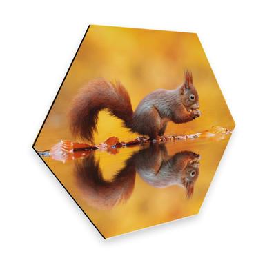 Hexagon - Alu-Dibond van Duijn - Eichhörnchen mit Nuss