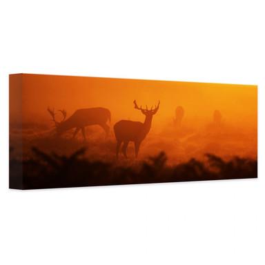 Leinwandbild Hirsche im Sonnenuntergang - Panorama