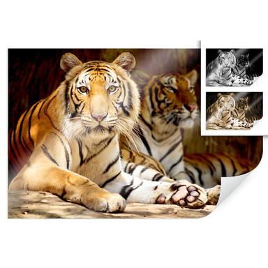 Poster Zwei Königstiger