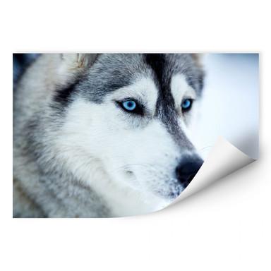 Wallprint Eisblaue Augen