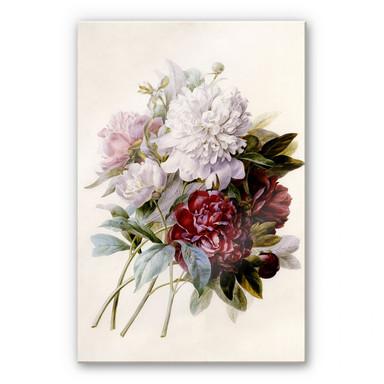 Acrylglasbild Redouté - Strauss von roten, lila und weissen Pfingstrosen