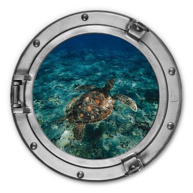 Alu-Dibond 3D Optik - Schildkröte von oben - Rund