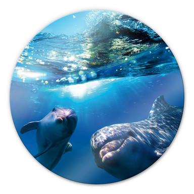 Glasbild Dolphins Underwater - rund