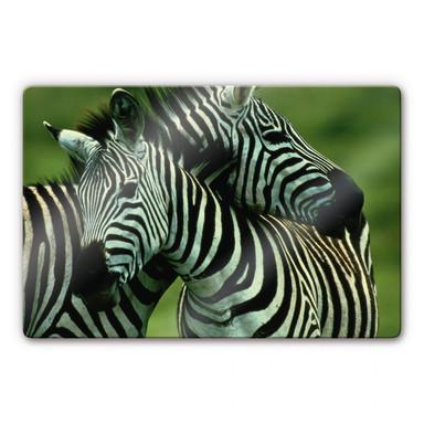 Glasbild Zebrapaar