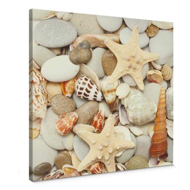 Leinwandbild Muscheln und Steine - Quadratisch