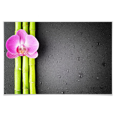 Poster Orchid and Bamboo