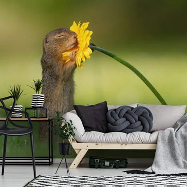 Fototapete van Duijn - Erdhörnchen riecht an Blume