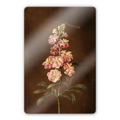 Glasbild Dietzsch - Eine rosa Garten Levkkoje