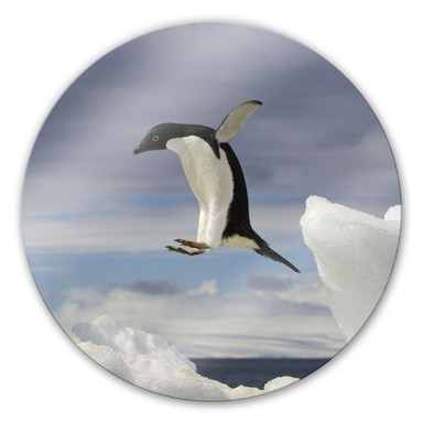 Glasbild Pinguin Fly - rund