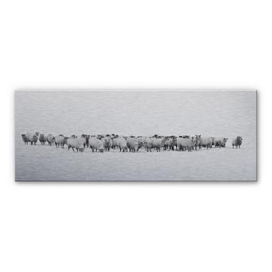 Alu Dibond-Silbereffekt Schafherde - Panorama