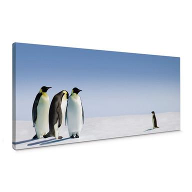 Leinwandbild Penguin - Panorama